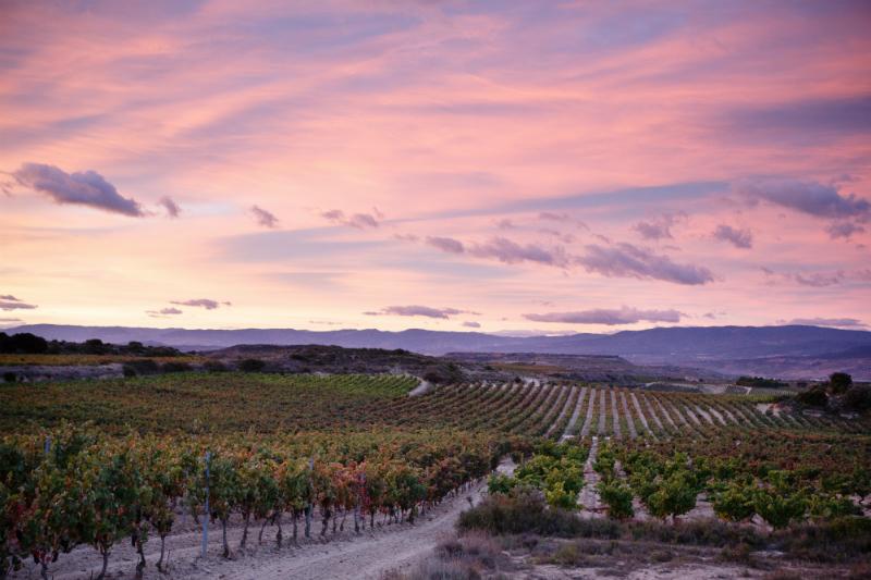 Bodegas Palacio 1894, más de cien años creando vinos desde la Rioja Alavesa | Luxury Spain